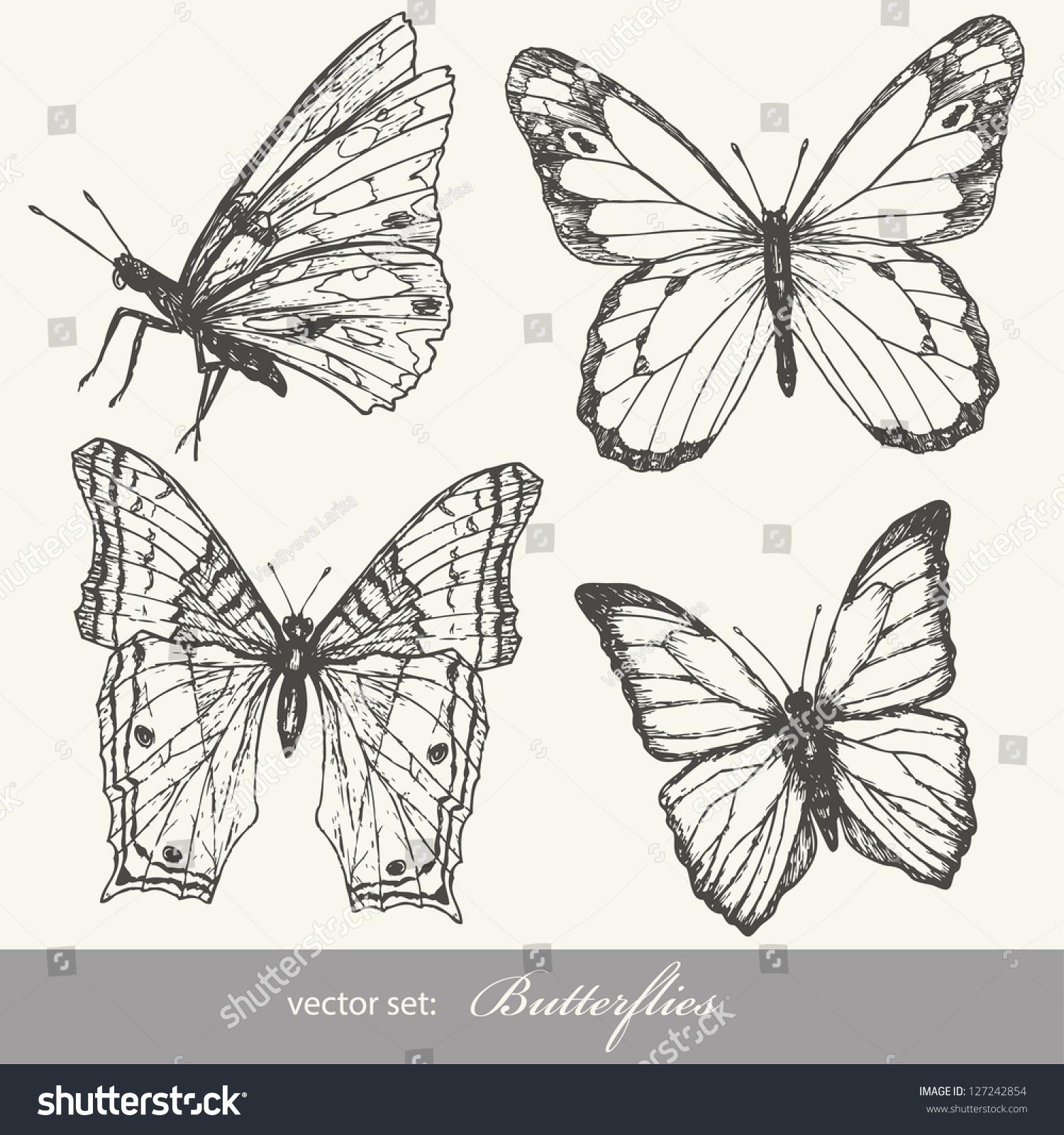 昆虫收集设计草图和剪贴簿.-动物/野生生物
