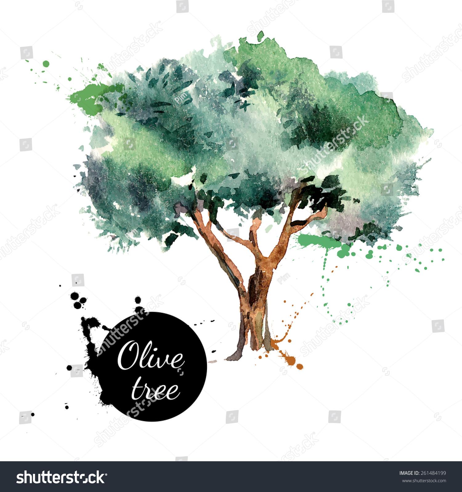 橄榄树矢量插图.手绘水彩画在白色背景上