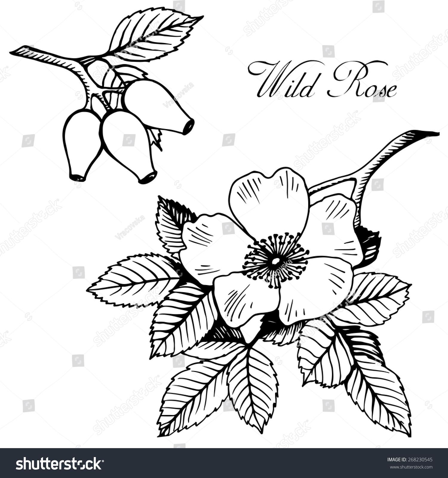 画玫瑰花花环展示图片