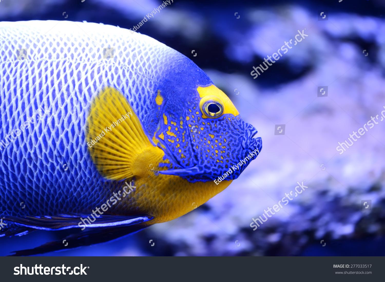 印度洋的海洋生物