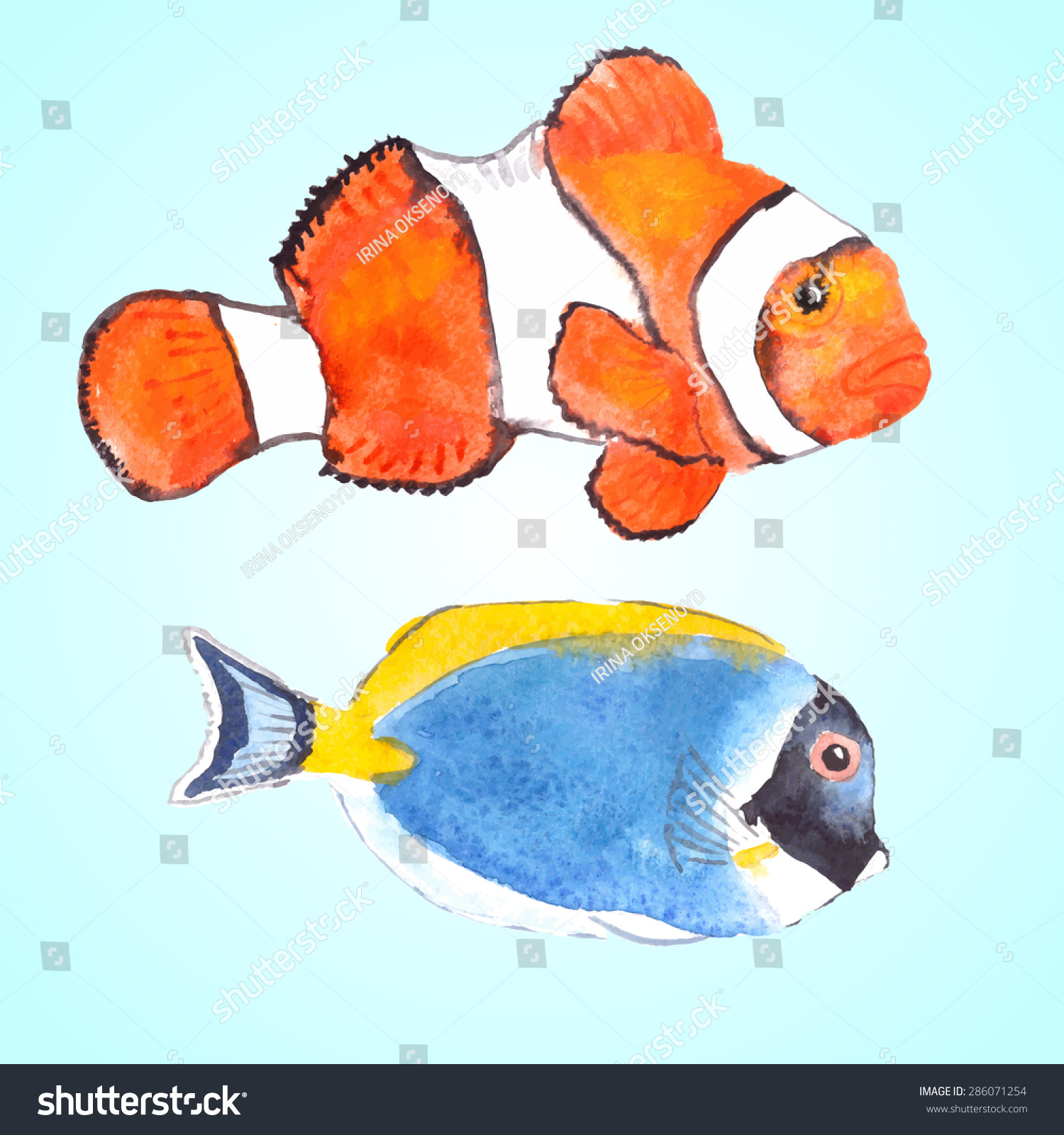 小丑鱼和海葵鱼和粉蓝色的