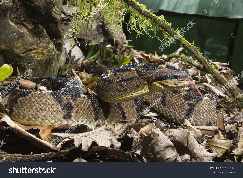 手工制作纸杯动物 蛇