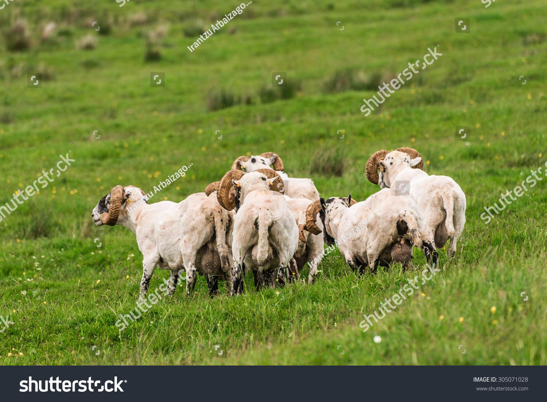 纸杯手工制作大全动物小羊