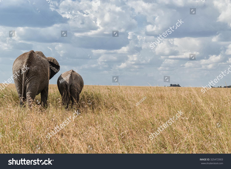 大象 动物 1500_1097