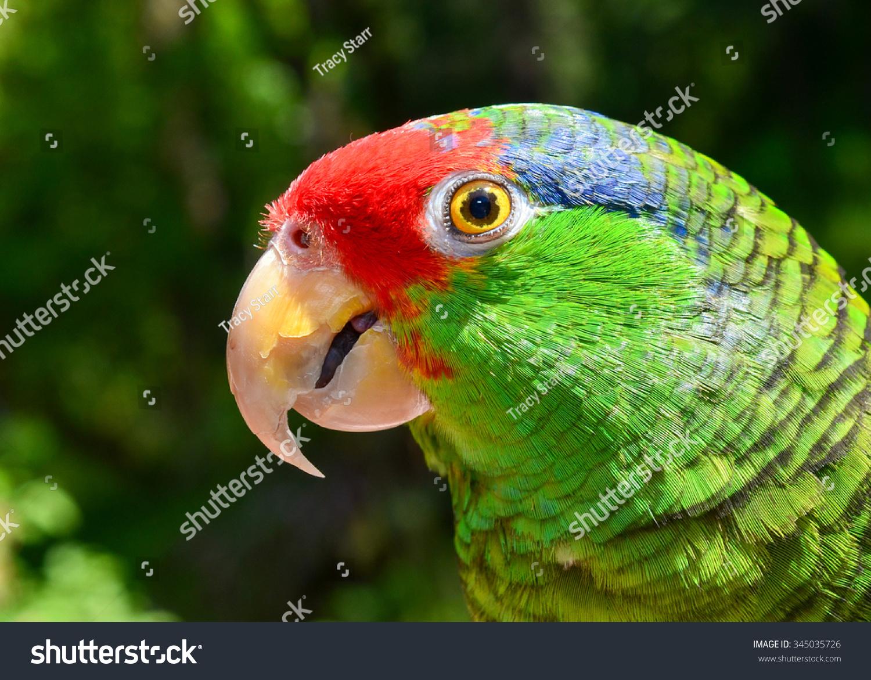 动物 鸟 鹦鹉 1500